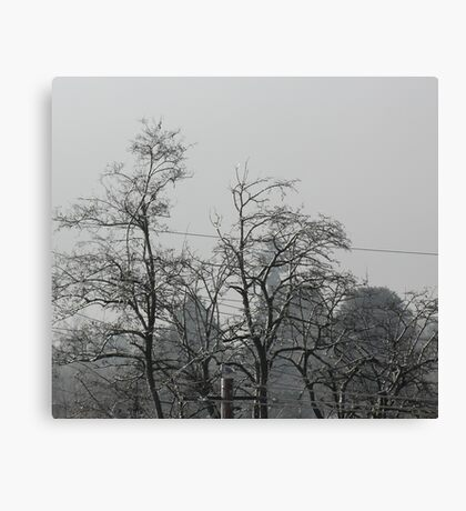 Seagull Among Frozen Trees Canvas Print