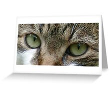 Cat's Eyes Greeting Card