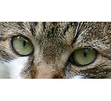 Cat's Eyes Photographic Print