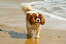 King Charles on the beach by Kawka