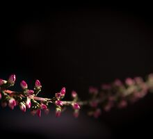 Small pink flowers by GemaIbarra