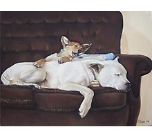 Cute puppy and white dog realist animal art  Photographic Print