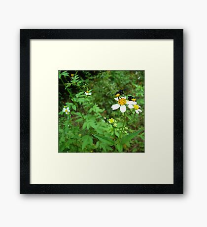 BLACK BEES WITH BUSTLES Framed Print