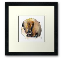 Curled up Baby Groundhog Framed Print