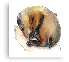 Curled up Baby Groundhog Canvas Print