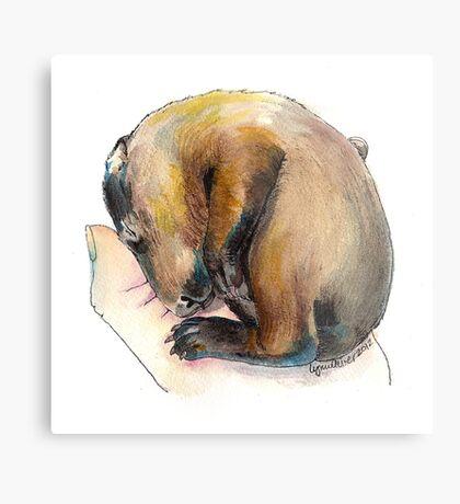 Curled up Baby Groundhog Metal Print