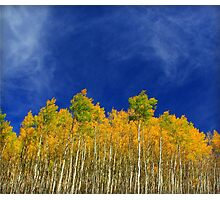 Autumn Aspens Photographic Print
