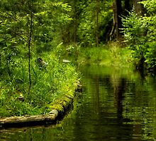 Green Peaceful Land - Nature Photography by JuliaRokicka