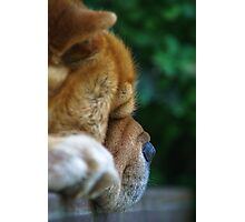 Chow dog face Photographic Print