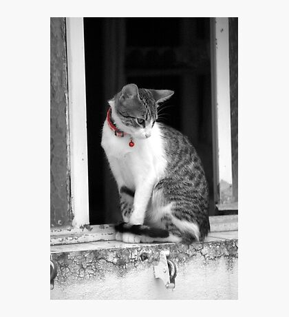 Gato con collar rojo Photographic Print