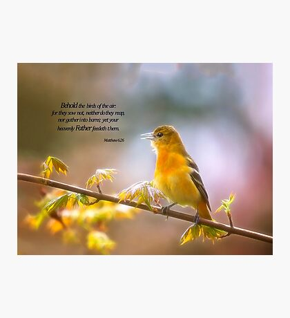 Behold the Birds Lady Oriole Photographic Print
