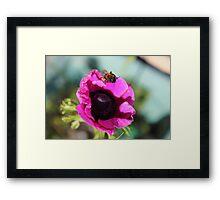 Pink Honey Framed Print