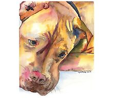 Killian, French Mastiff extraordinaire Photographic Print
