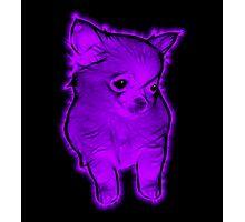Purple Chihuahua Photographic Print