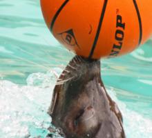The Sea-Lion Show Sticker