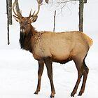 Such a Dear Deer. by vette