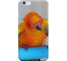 Turn It On - Sun Conure NZ iPhone Case/Skin
