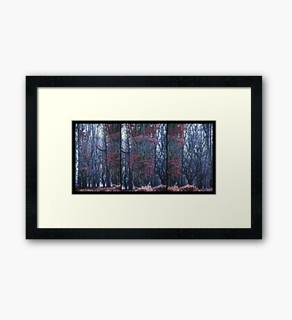 Faerie Trees ~ Fairy Trees With No Blurred Background Framed Print