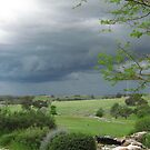 Hoping for Rain! 'Arilka' Mount Pleasant. Adelaide Hills. Sth. Aust. by Rita Blom