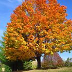 The Perfect Autumn Tree by lorilee