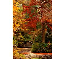 Autumn in the Dandenongs  Photographic Print