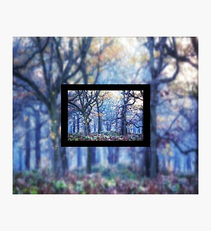 The Enchanted Forest Landscape with Single border Photographic Print
