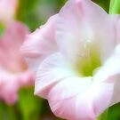 Gladiola by Karen Peron