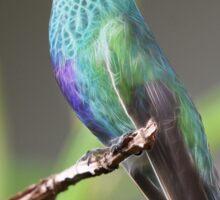 Hummingbird Fractal Sticker