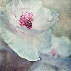pink and white by Priska Wettstein