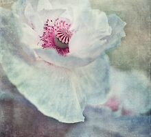 pink and white by Priska Wettstein
