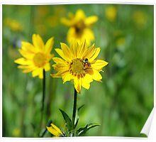 Colorado Wildflowers Poster