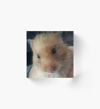 hamster Acrylic Block