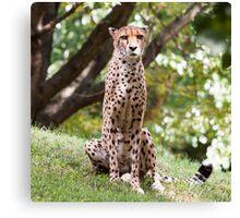 The Watching Cheetah Canvas Print