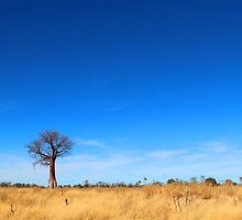 Boabab in the Delta by jozi1