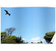 Berkeley   Marina Hawk Poster
