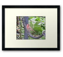 Always the show off Framed Print