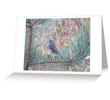 Back in gray Greeting Card