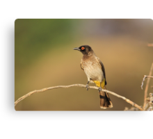 Red-eyed Bulbul - African Wild Bird - Perch of Color Canvas Print