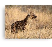 Spotted Hyena, Serengeti National Park, Tanzania. Canvas Print