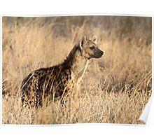 Spotted Hyena, Serengeti National Park, Tanzania. Poster