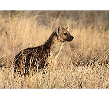 Spotted Hyena, Serengeti National Park, Tanzania. Photographic Print
