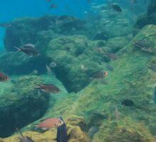 Underwater Dreamworld Sticker