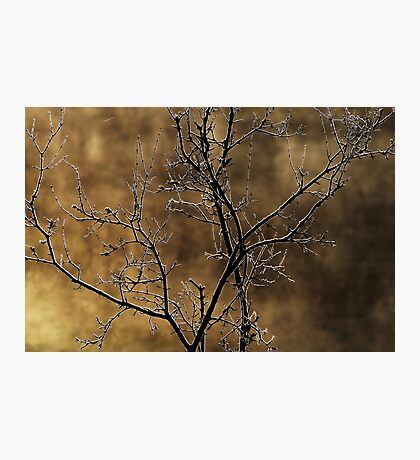 In the light of an autumn morning Photographic Print