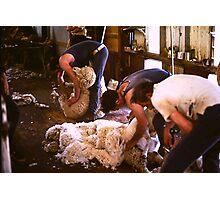 Shearing Photographic Print