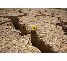 Flowers grows out of dry cracked mud  Photographic Print