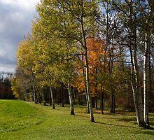 Autumn Forests and Fields by Georgia Mizuleva