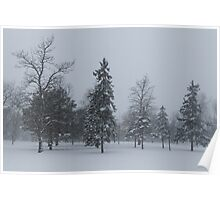 A Cold December Morning - Snowstorm in the Park Poster