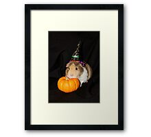Lily (8 weeks old) Waiting for Halloween Framed Print
