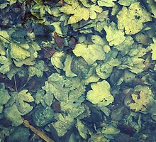 Autumn leaves in water by Anna Váczi
