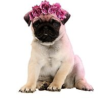 Hipster Pug Puppy Photographic Print